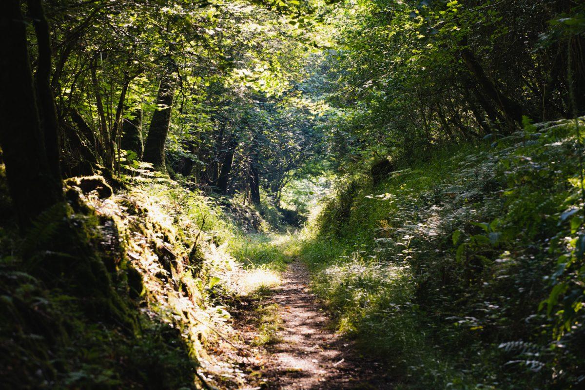 A Path in Cabilla woods