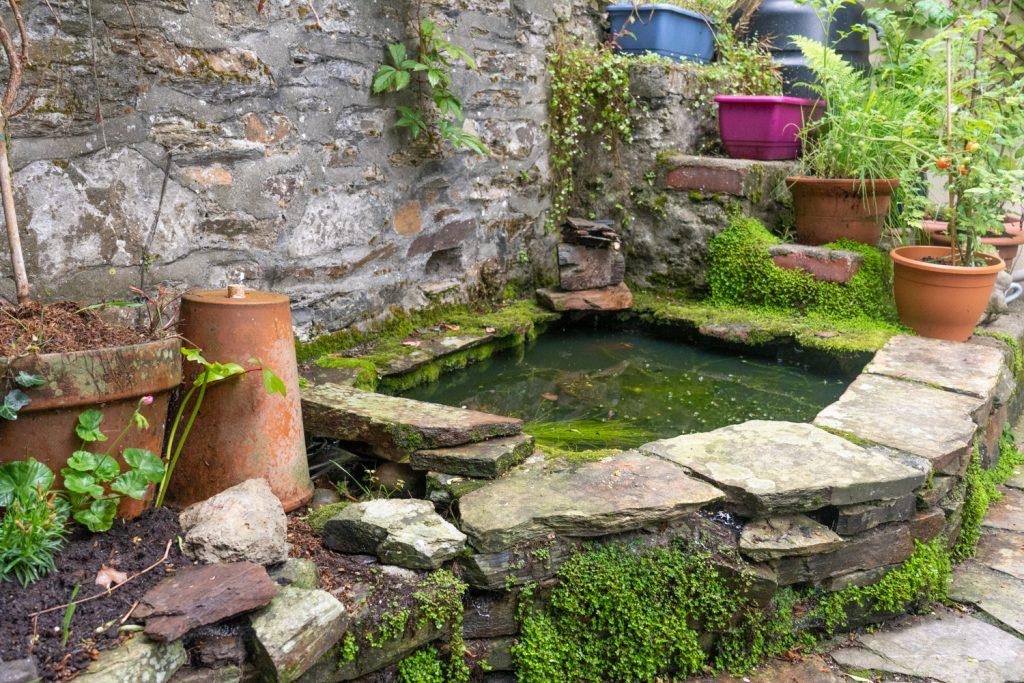 A garden nature pond